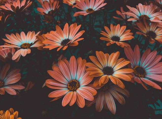 Verschönern Sie Ihr Zuhause unter Zuhilfenahme von einer Bildtapete voll mit Blumen